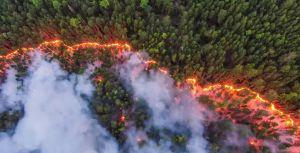 فنلندا تكافح أسوأ حريق غابات منذ 50 عاماً