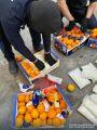 برتقال بالكبتاجون .. إحباط أكثر من 4.5 ملايين حبة مخدرة في ميناء جدة